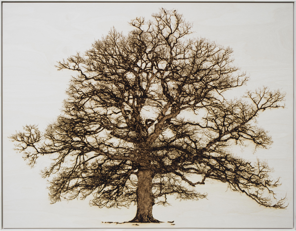 Oak In Garth - Tree drawing lasered onto wood